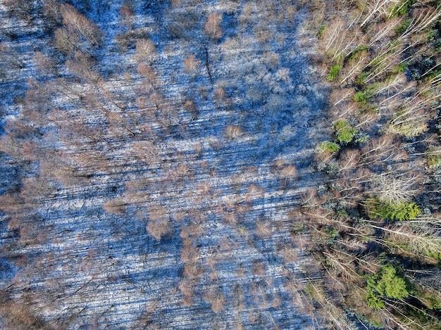 Wspaniałe ujęcie z lotu ptaka zimowej scenerii lasu