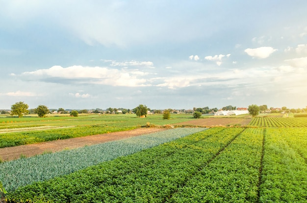 Wspaniałe widoki na europejskie pola uprawne. przemysł rolny i agrobiznes. widok z lotu ptaka na wieś