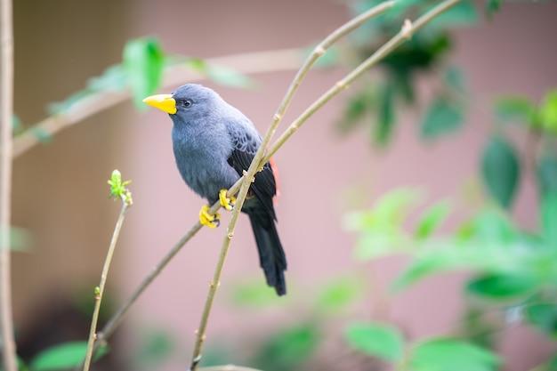 Wspaniały jasny wielobarwny tropikalny ptak siedzący na gałęzi drzewa.