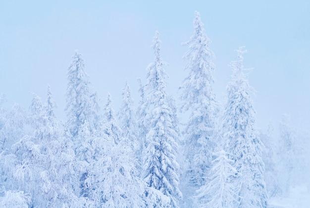 Wspaniały świąteczny zimowy las o zachodzie słońca, wszystko pokryte jest śniegiem.