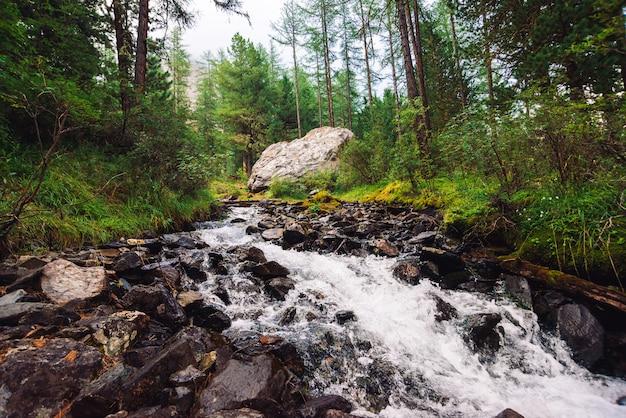 Wspaniały szybki strumień wody w dzikim górskim potoku.