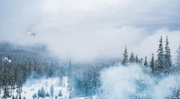 Wspaniały, urzekający widok na wysokie, ośnieżone góry i las w słoneczny zimowy dzień.