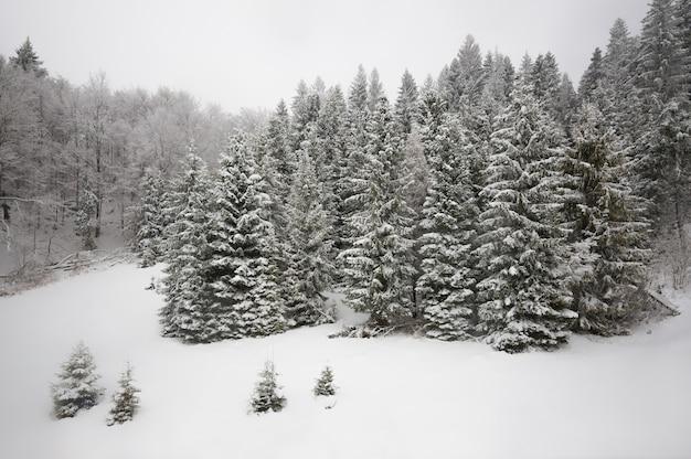 Wspaniały widok na zaśnieżone wzgórze z jodłami i śniegiem na tle szarego zachmurzonego nieba