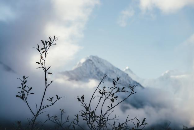 Wspaniały widok przez sylwetki gałęzi z jesiennymi liśćmi na zaśnieżoną górę nad gęstymi chmurami w słońcu. malowniczy górski krajobraz ze szczytem białego śniegu wśród gęstych niskich chmur w rozmyciu.