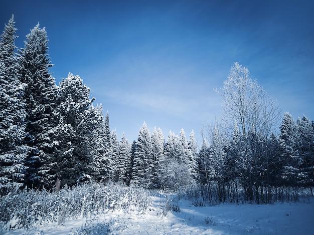 Wspaniały zimowy mroźny krajobraz.