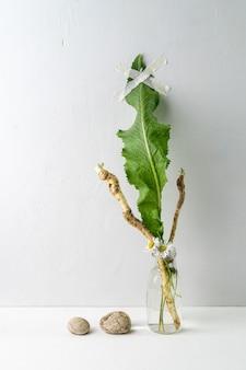 Współczesna martwa natura z korzeniami i liściem chrzanu w szklanym słoju i dwóch małych kamyczkach