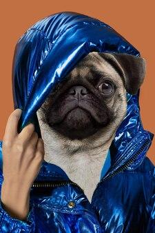 Współczesna sztuka kolaż portret pozytywny pies z głową kobiety nowoczesny styl pop-artu koncepcja kultury zinowej