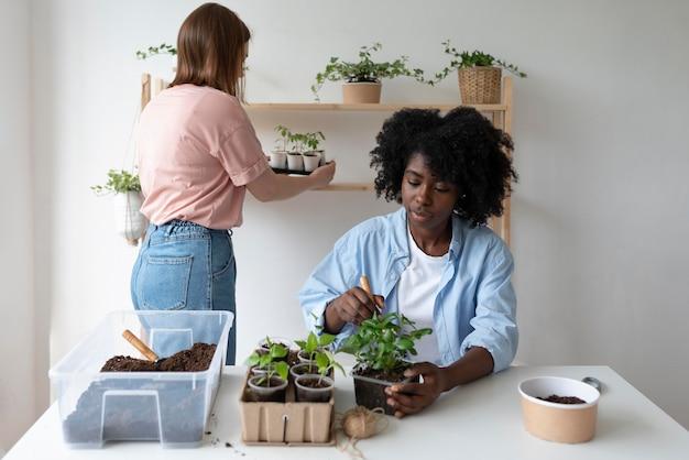 Współlokatorzy posiadający zrównoważony ogród w pomieszczeniu