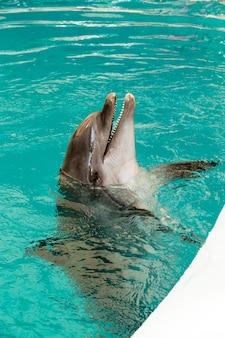Wspólny portret delfina podczas patrzenia na ciebie