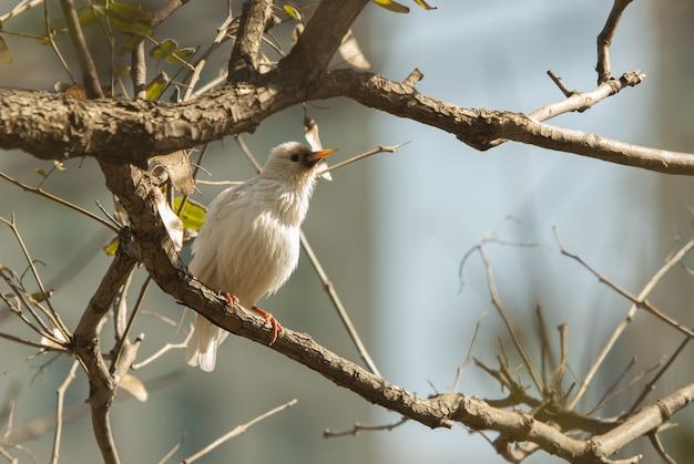 Wspólny ptak słowik siedzący na gałęzi drzewa