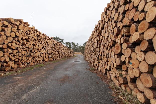 Wybór drewnianych pniaków na wsi