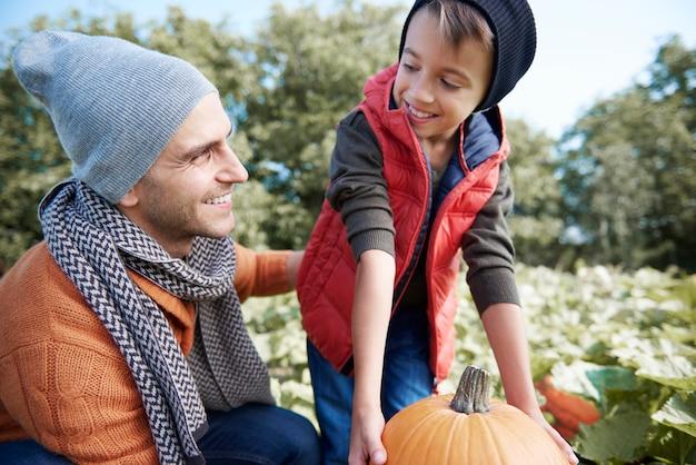 Wybór idealnej dyni na halloween