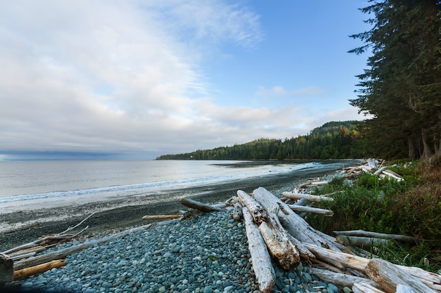 Wybrzeże oceanu spokojnego w kolumbii brytyjskiej w kanadzie. koncepcja podróży wanderlust.