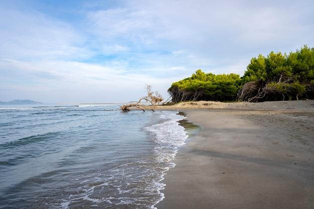 Wybrzeże zalane powalonym drzewem podczas burzy