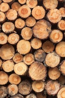 Wycinka drzew, wylesianie planety. ułożone kłody. scena ułożonych kawałków. pino de valsain w segowii, castilla y leon.