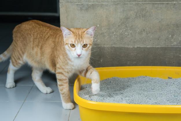 Wydalanie kotów odbywa się codziennie.