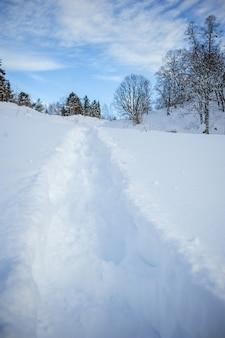 Wydeptana ścieżka w zimowym lesie.