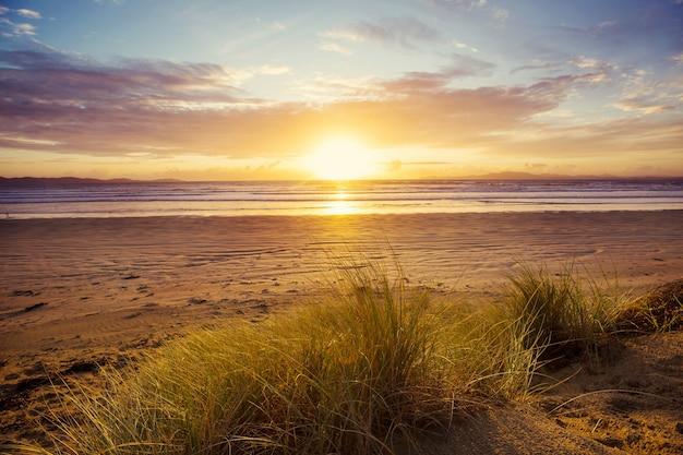 Wydma na plaży nad oceanem spokojnym, nowa zelandia