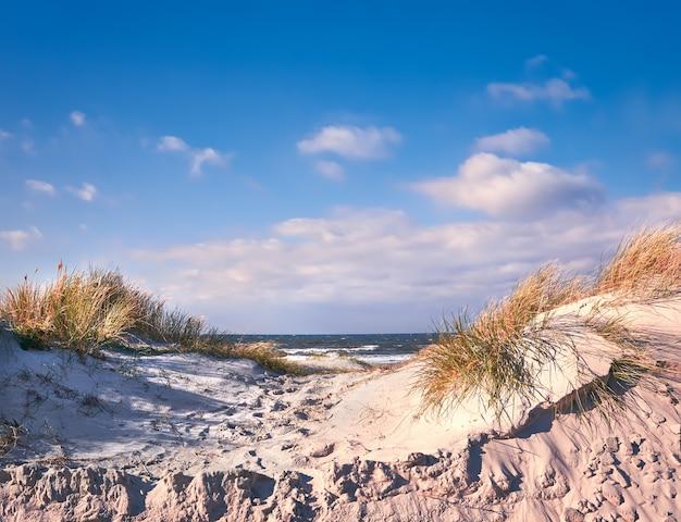 Wydmy chroniące plażę na wyspie hiddensee w niemczech. żółta trawa. zwiędła żółta trawa.