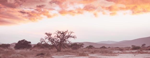 Wydmy i martwe drzewa akacji na pustyni namib, dead vlei, sossusvlei, namibia, afryka. znana miejscowość turystyczna