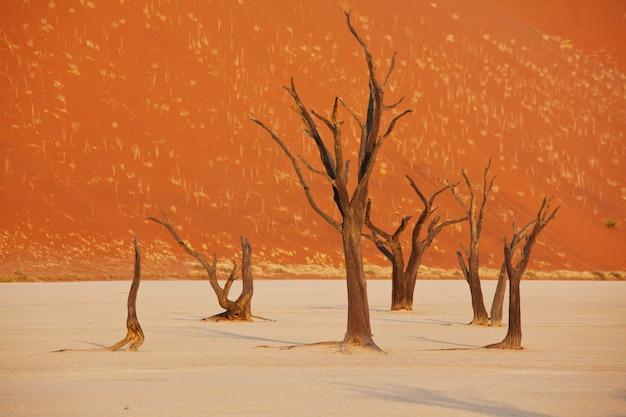 Wydmy i martwe drzewa akacjowe na pustyni namib, dead vlei, sossusvlei, namibia, afryka. znane miejsce turystyczne