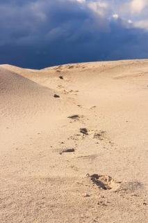 Wydmy, piasek