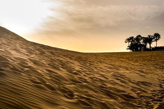 Wydmy pustyni na świeżym powietrzu piękne miejsce na przygodę i wakacje podróżnika. jak ogromna plaża. czas zachodu słońca dla ponadczasowego wypoczynku. suchy klimat kraj z tropikalnymi palmami d