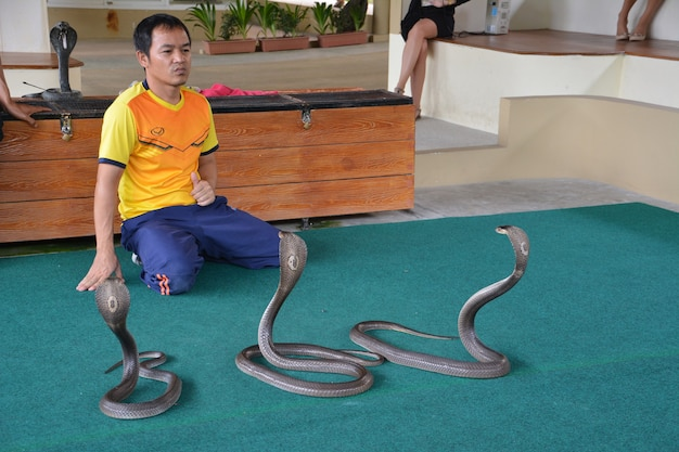 """Wykonawca """"pokazu węży"""" bawi się z kobrą podczas pokazu w zoo."""