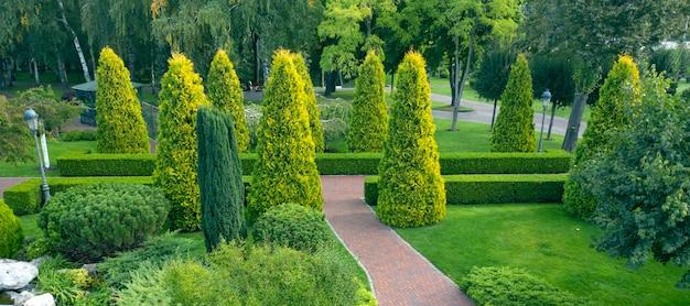 Wykorzystanie roślin zimozielonych w kształtowaniu krajobrazu. tuja, bukszpan i rośliny ozdobne w pobliżu ścieżki w parku.