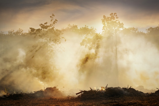 Wylesianie lasów deszczowych w azji. dym i zanieczyszczenie powietrza z płonących pól rolnych.