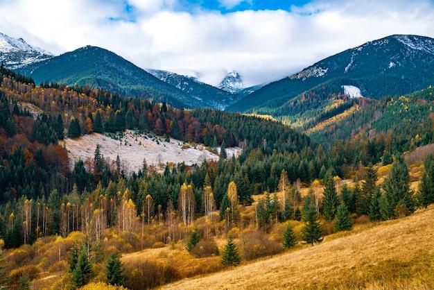 Wylesianie lasów karpackich podczas cudownej ciepłej jesieni w niezwykłej przyrodzie ukrainy