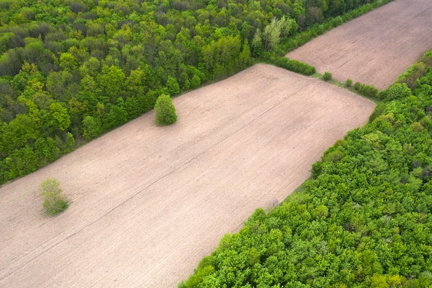 Wylesianie w dużym lesie