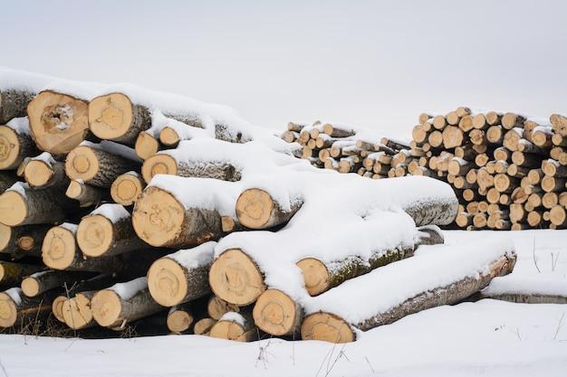 Wylesione drzewa zimą. drewno opałowe na sprzedaż