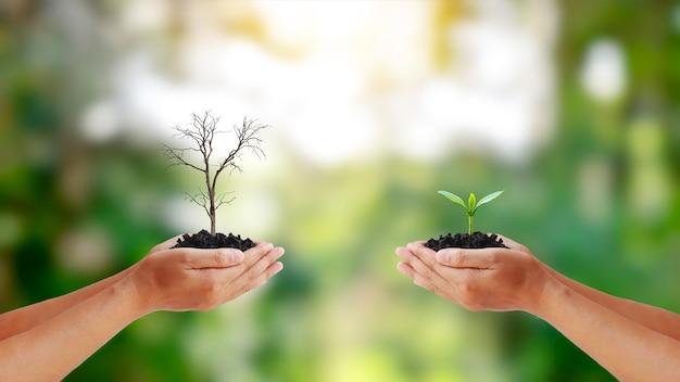 Wymień suszone rośliny w ludzkich rękach na sadzonki w ludzkich rękach.