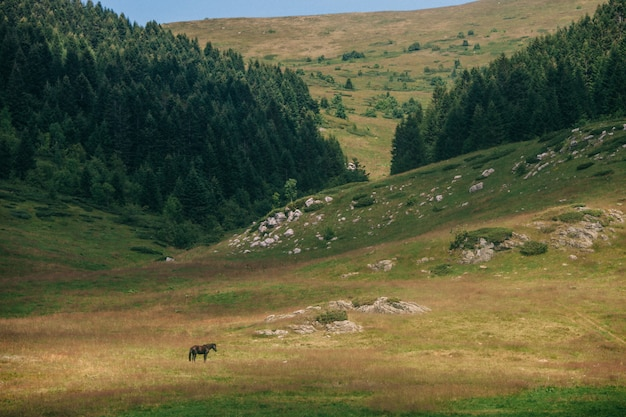 Wypas czarnego konia na pastwisku alpejskim. park narodowy biogradska gora, czarnogóra.