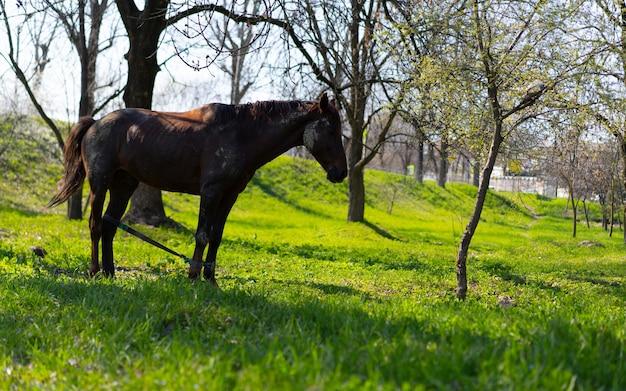 Wypas koni na łące
