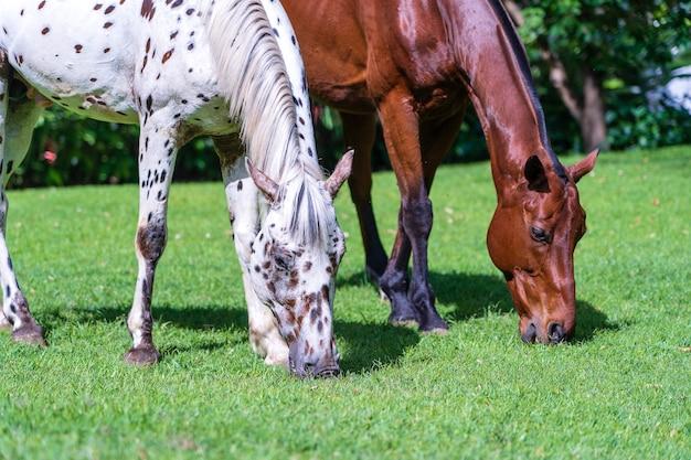 Wypas koni na zielonej trawie w tropikalnym ogrodzie. tanzania, afryka wschodnia