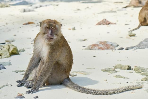 Wyraz twarzy małpy przyrodzie skały plaży