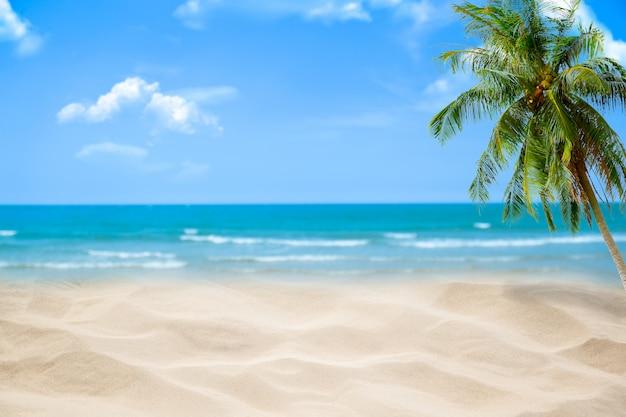 Wyrzucać na brzeg z rozmytym błękitnym oceanem i niebem, drzewka palmowego tło