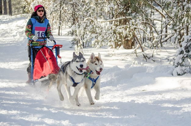 Wyścigi psich zaprzęgów. kobieta musher i husky zespół psich zaprzęgów