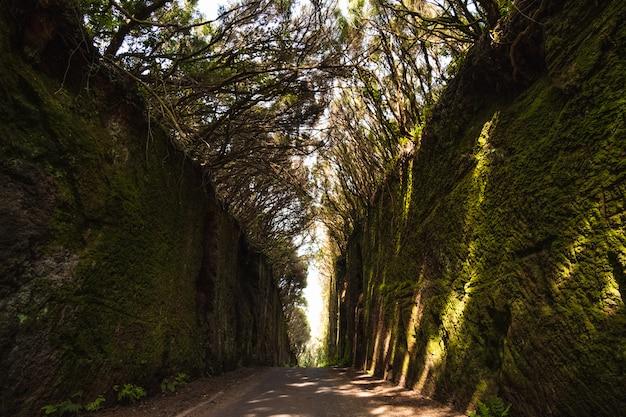 Wysoka roślinność w lesie