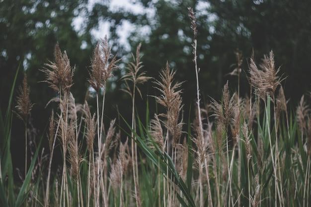 Wysoka trawa tło