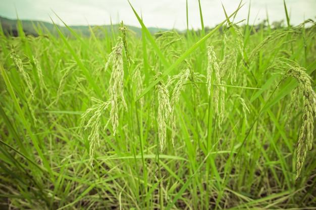Wysoka trawa z zielonym krajobrazem i efektem vintage.