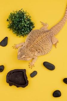 Wysoki kąt iguany z roślinnością i skałami