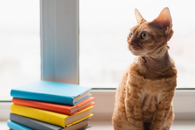Wysoki kąt kota besdie stos książek
