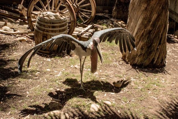 Wysoki kąt strzału bociana marabuta w słoneczny dzień