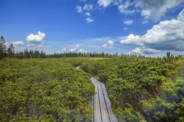 Wysoki kąt strzału drewnianego szlaku w pobliżu jeziora ribnica na wzgórzach pohorje w słowenii