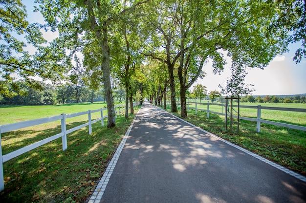 Wysoki kąt strzału drogi otoczonej płotami i drzewami w lipica, park narodowy w słowenii