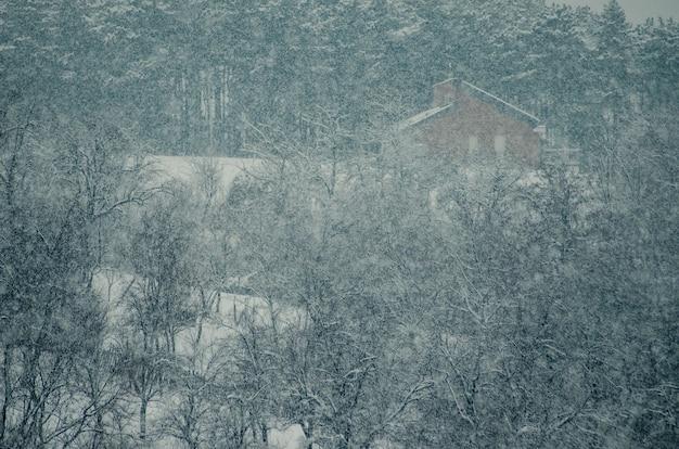 Wysoki kąt strzału drzew w lesie pokryte śniegiem podczas płatka śniegu