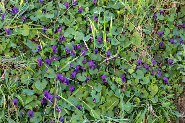Wysoki kąt strzału fioletowych kwiatów i zielonych liści w ciągu dnia
